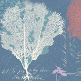 Coral on Blue Posters by Wendy MacFarlane