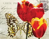 Carte Postale Tulip II Posters by Amy Melious
