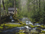 Watermill in Forest by Stream, Roaring Fork, Great Smoky Mountains National Park, Tennessee, USA 写真プリント : アダム・ジョーンズ
