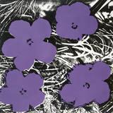 Andy Warhol - Flowers, C.1965 (4 Purple) Obrazy