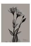 Flower 3 Posters by Albert Koetsier