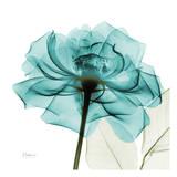 Teal Rose Affiche par Albert Koetsier