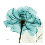 Teal Rose Print van Albert Koetsier