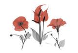 Red Black Bouquet Prints by Albert Koetsier