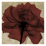 Ox Blood Rose Prints by Albert Koetsier