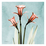 Daffodil Prints by Albert Koetsier