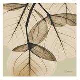 Eucalyptus Prints by Albert Koetsier