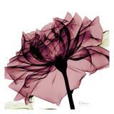 Albert Koetsier - Chianti Rose - Poster