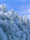 Snow Covered Trees in Forest, Newfound Gap, Great Smoky Mountains National Park, Tennessee, USA Photographic Print by Adam Jones
