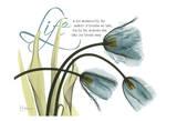 Life Tulips Poster by Albert Koetsier