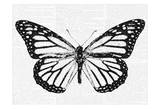 Butterfly 2 Prints by Taylor Greene