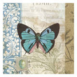 Butterfly Print by Tammy Repp