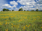 Field of Flowers and Trees with Cloudy Sky, Texas Hill Country, Texas, USA Photographic Print by Adam Jones