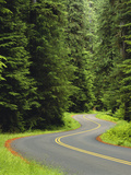 Road Trough Old Growth Forest, Olympic National Park, Washington, USA Photographic Print by Adam Jones