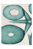 Under The Sea 2 Prints by Albert Koetsier