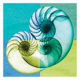 Blue Green Shell 2 Prints by Albert Koetsier