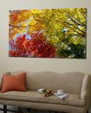 Kleurrijke bomen in de herfst van onderaf gefotografeerd Posters