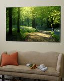 Chemin traversant une forêt de hêtres avec des campanules au printemps, Lanhydrock, Cornouailles, Royaume-Uni Poster par Ross Hoddinott