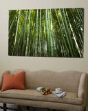 Bamboo Forest, Arashiyama-Sagano District Kunst av Greg Elms