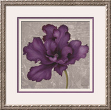 Black Plum 2 Framed Giclee Print by Ariane Martine