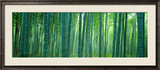 Bamboo Forest, Sagano, Kyoto, Japan Framed Photographic Print by  Panoramic Images