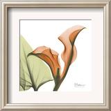 A Gift of Calla Lilies in Orange Posters by Albert Koetsier