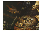 Nest of Redstarts with White Head, Detail Giclee Print by Abraham Mignon