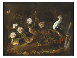 Still Life with Quail, an Owl and a Black-Winged Stilt, C.1656 Giclee Print by Paolo Porpora