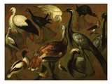 Studies of Birds Giclee Print by Fran&#231;ois Desportes