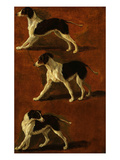 Spaniel in 3 Attitudes Giclee Print by Fran&#231;ois Desportes