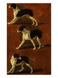 Spaniel in 3 Attitudes Giclee Print by François Desportes