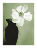 Single Anemone Giclee Print by Steven N. Meyers