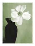 Single Anemone Giclee Print by Steven N. Meyers