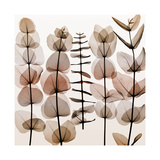 Eucalypti II (Middle) Giclee Print by Steven N. Meyers