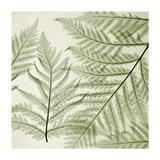 Ferns I Giclee Print by Steven N. Meyers