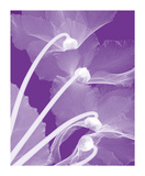 Cyclamen/White Giclee Print by Steven N. Meyers