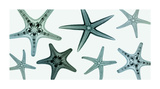Starfish Collection (Teal) Giclee Print by Steven N. Meyers
