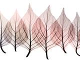 Celosía de hojas Lámina giclée por Steven N. Meyers