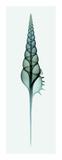 Tibia (Teal) Giclee Print by Steven N. Meyers