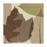 Four Leaves 2 Giclee-trykk av Steven N. Meyers