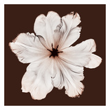 Ruffled Tulip Giclee Print by Steven N. Meyers