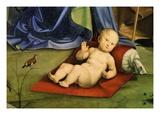 The Christ Child, from Pala Bentivoglio (The Bentivoglio Altarpiece) (Detail) Giclee Print by Francesco Francia