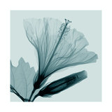 Hibiscus 2 Giclee Print by Steven N. Meyers