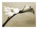 Steven N. Meyers - Calla/Anemone Digitálně vytištěná reprodukce