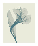 Alstromeria I Giclee Print by Steven N. Meyers