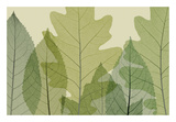 Six Leaves Giclee Print by Steven N. Meyers