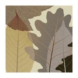 Four Leaves 1 Giclee Print by Steven N. Meyers