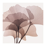Gingko Leaves II Reproduction procédé giclée par Steven N. Meyers