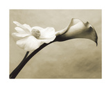 Calla/Anemone Giclee Print by Steven N. Meyers
