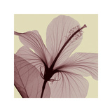 Hibiscus Giclee Print by Steven N. Meyers